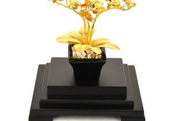 Báo giá chậu bonsai chậu lan, kim ngân, hoa sen, mai vàng