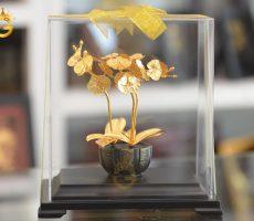 Chậu hoa lan hồ điệp dát vàng 24k làm quà tặng vợ, tặng bạn gái