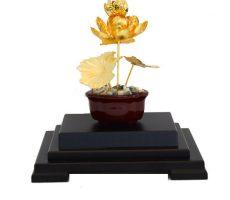 Chậu sen vàng 24k, hoa sen vàng lá