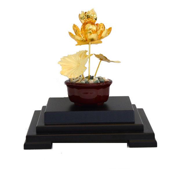 Chậu sen vàng 24k, hoa sen vàng lá0