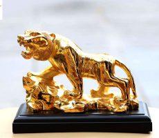 Hổ vàng 22 cm – cao sơn viễn vọng